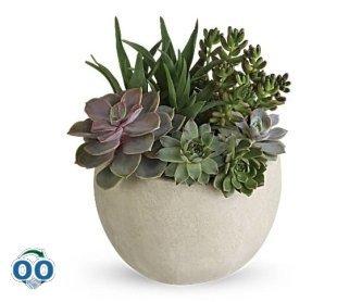 Desert Beauty Succulent Garden