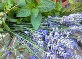 Peppermint & Lavender Foot Cream