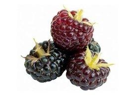 Boysenberry, Menchie's Frozen Yogurt